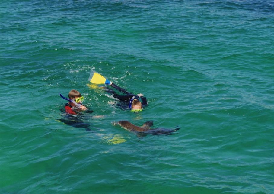 Blog un tour a deux voyage monde australie perth pinnacles desert nager avec les sea lions