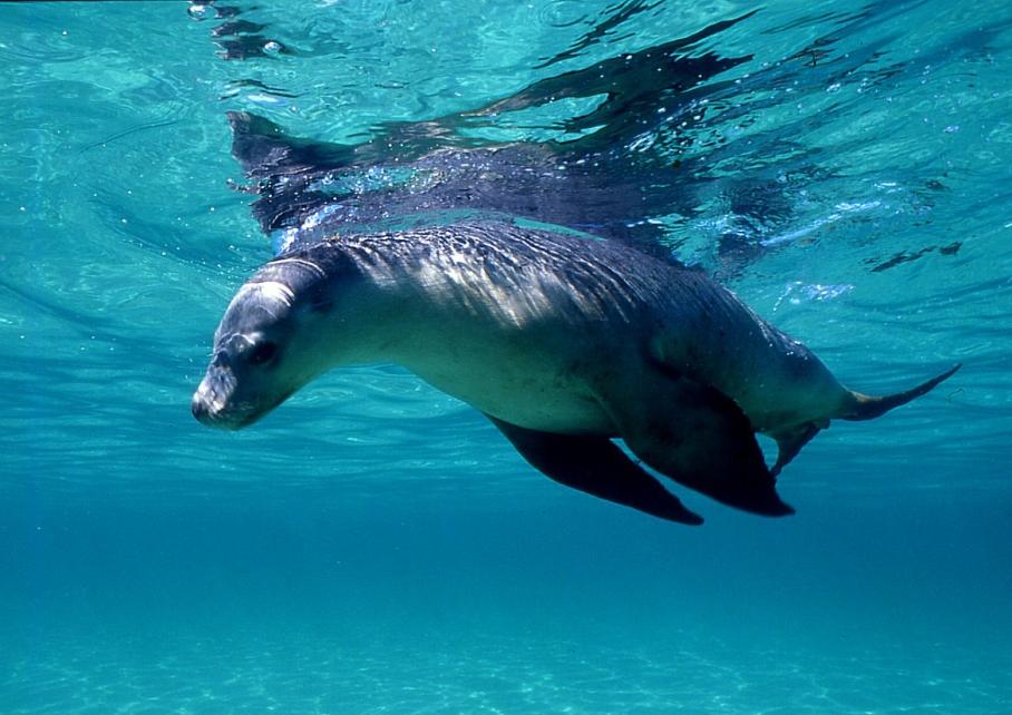 Blog un tour a deux voyage monde australie perth pinnacles desert nager swim with sea lions julien bay
