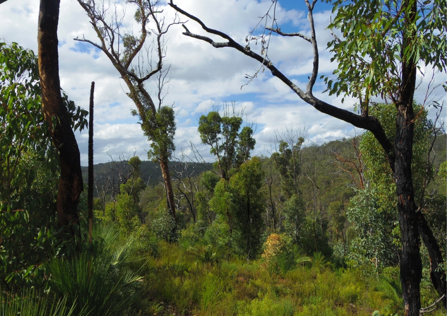 Perth Australie Voyage Blog Travel un tour a deux Trail John National Forrest Eagle track Hike Australia view