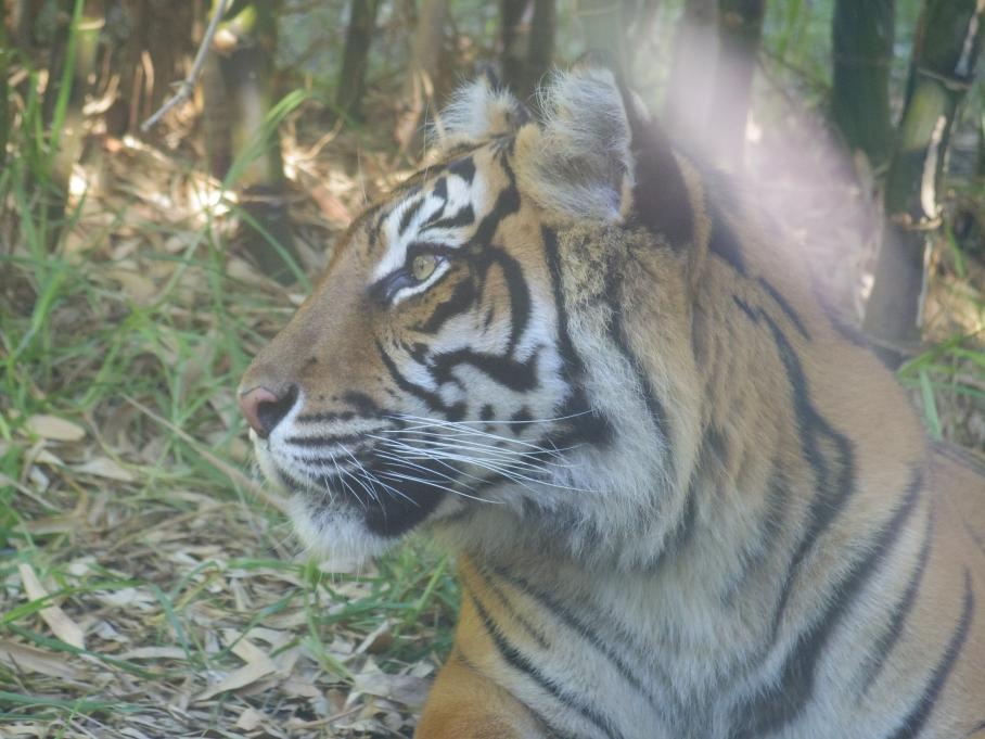 12- Zoo Perth - untouradeux.com