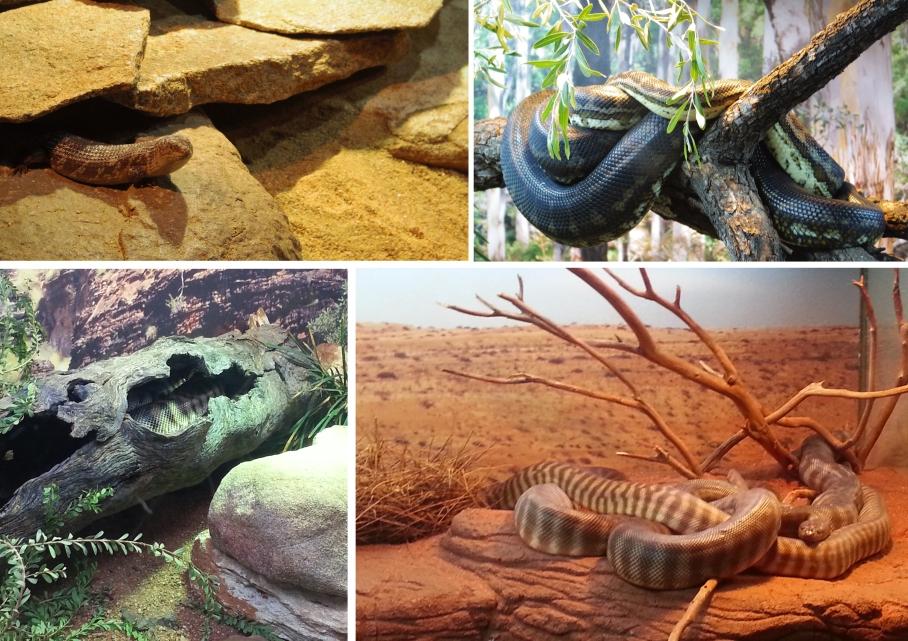 Snakes - Zoo Perth - untouradeux.com