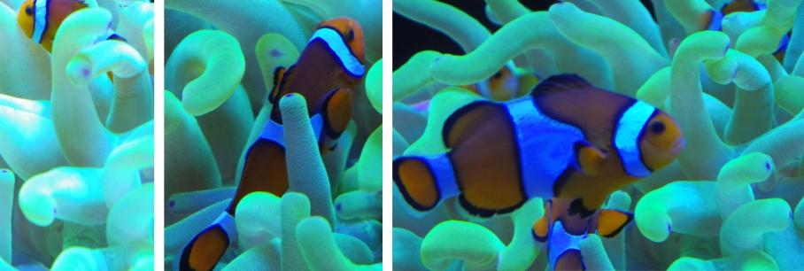Aquarium bis by untouradeux.com