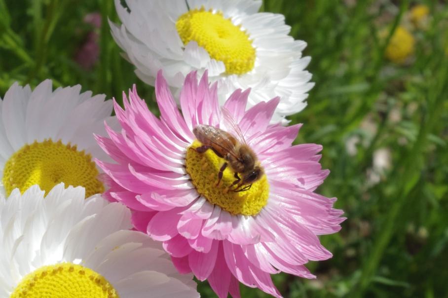 Flowers2 -untouradeux.com