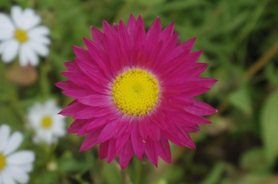 Flowers3 -untouradeux.com