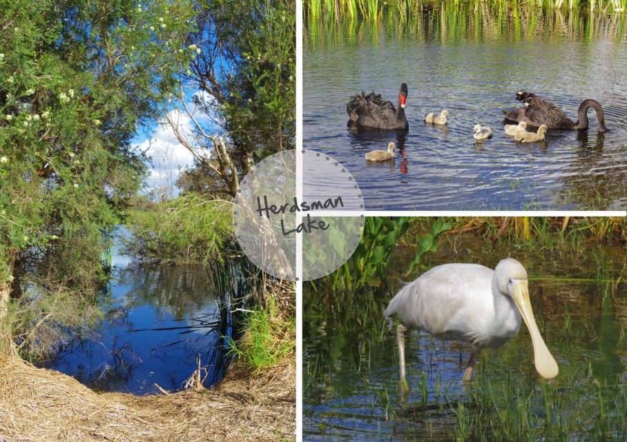 Herdsman Lake - untouradeux.com