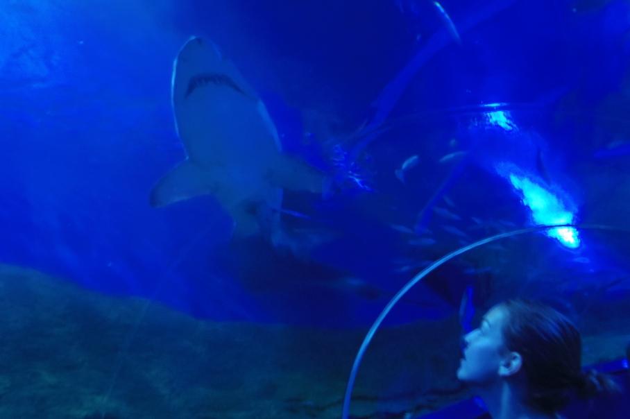 Shark 1 - untouradeux.com
