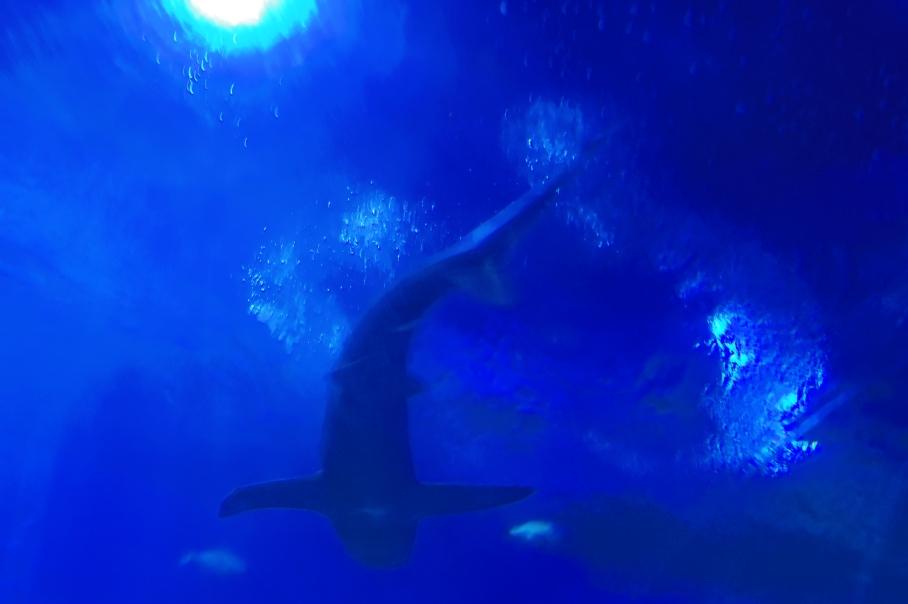 Shark 3 - untouradeux.com