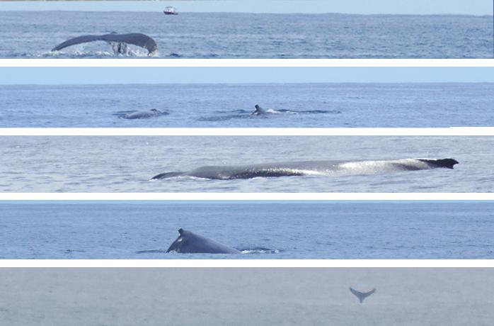 whale rottnest by untouradeux.com