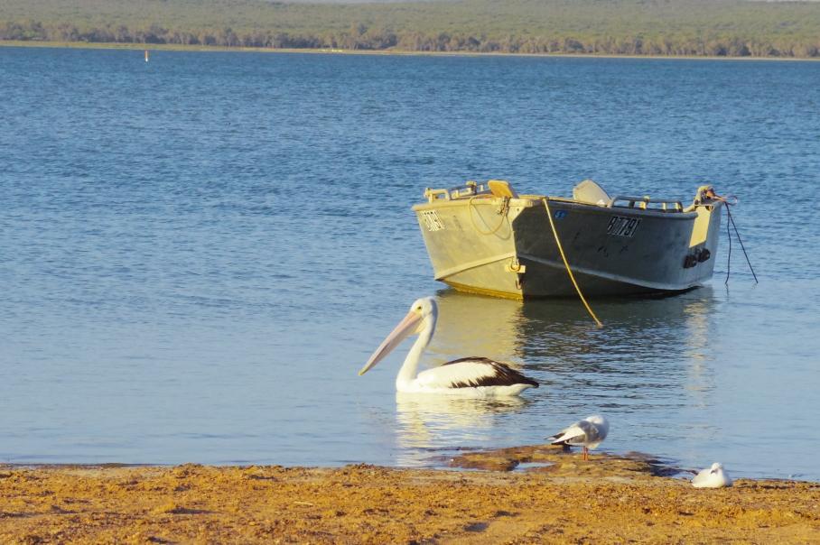 Kalbarri Pelican by untouradeux.com