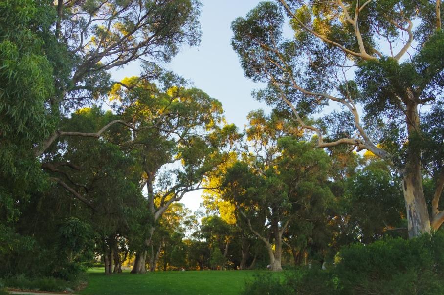 blog australie travel voyage un tour a deux flowers paysage