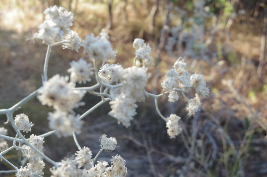 blog australie travel voyage un tour a deux flowers soleil
