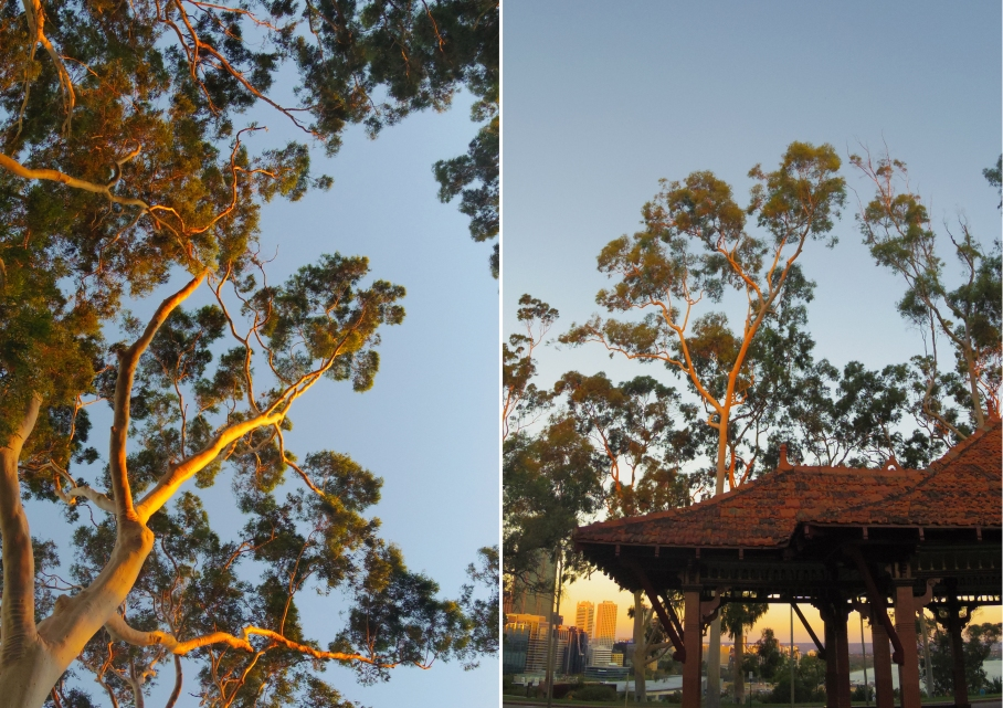 blog australie travel voyage un tour a deux sunset tree