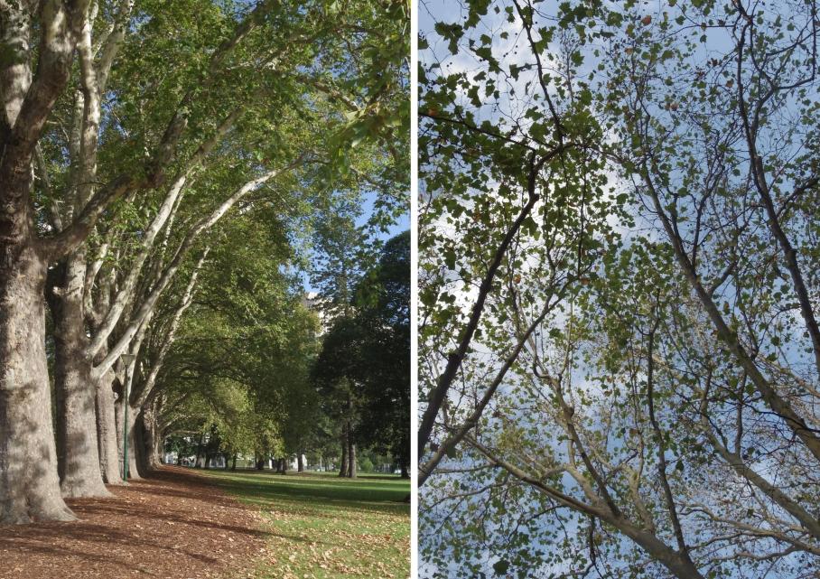 Un tour a deux Melbourne Australie Voyage Trave Trees Garden