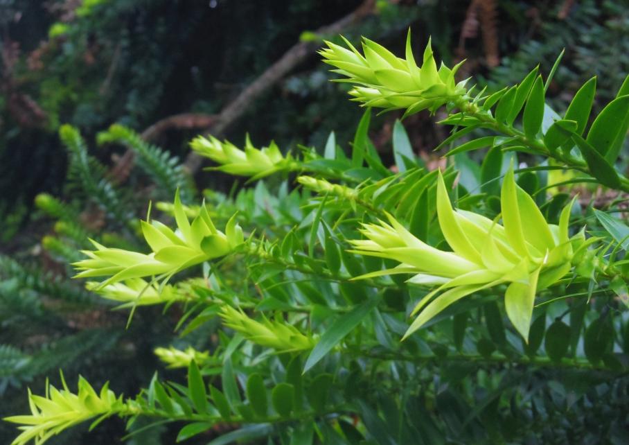 Un tour a deux Melbourne Australie Voyage Travel Botanic Garden Flower