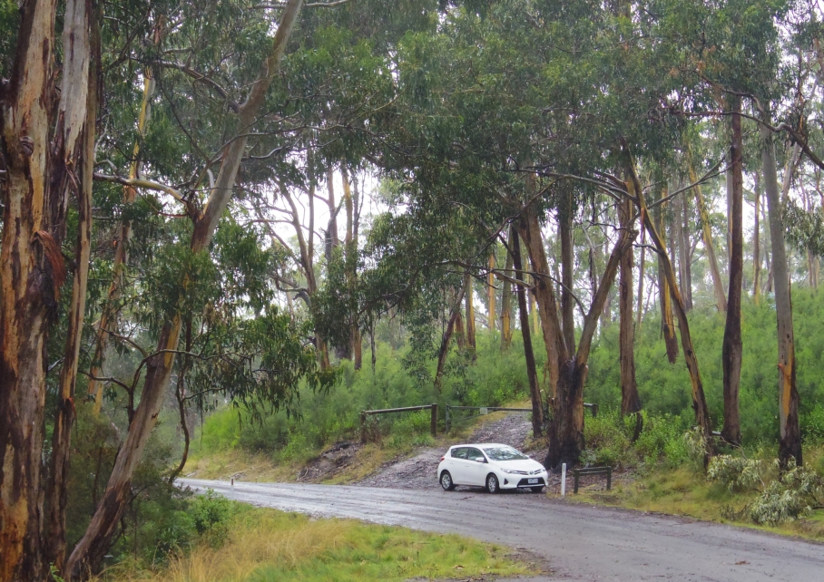 Un tour a deux travel voyage australie Melbourne Great Ocean Road Koala Rainy Day Car