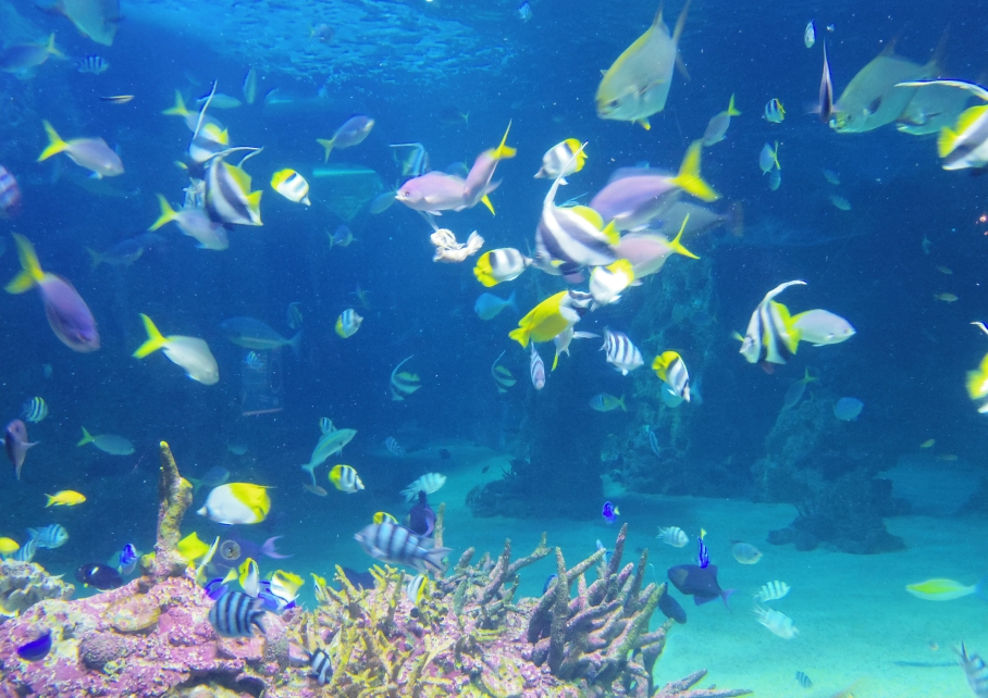 Un tour a deux travel voyage australie Sydney Aquarim Fish