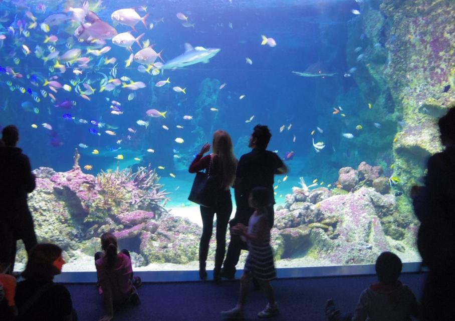 Un tour a deux travel voyage australie Sydney Aquarum