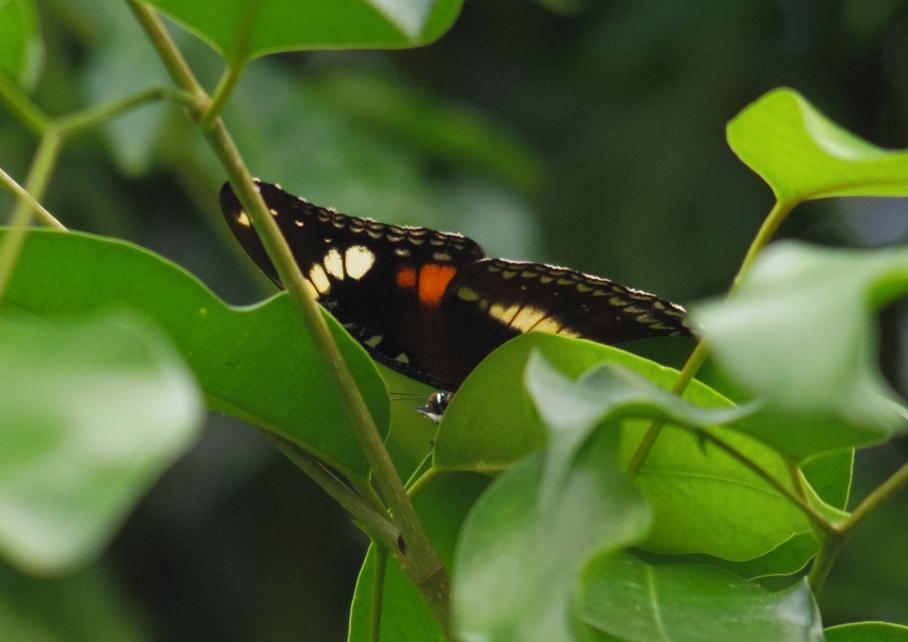 Un tour a deux travel voyage australie Sydney Butterfly