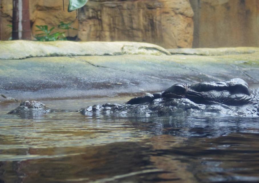 Un tour a deux travel voyage australie Sydney Crocodile
