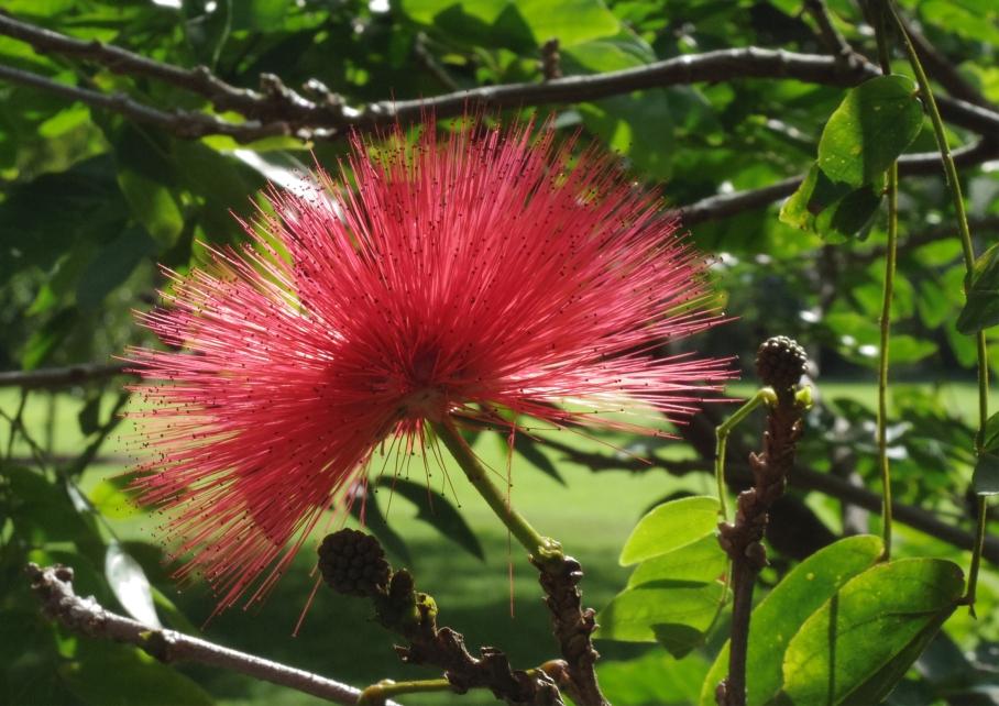 Un tour a deux travel voyage australie Sydney Flower Royal Botanic Garden