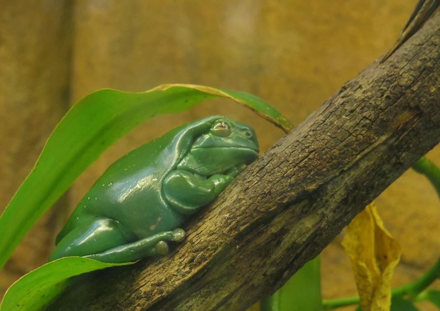 Un tour a deux travel voyage australie Sydney Green Frog