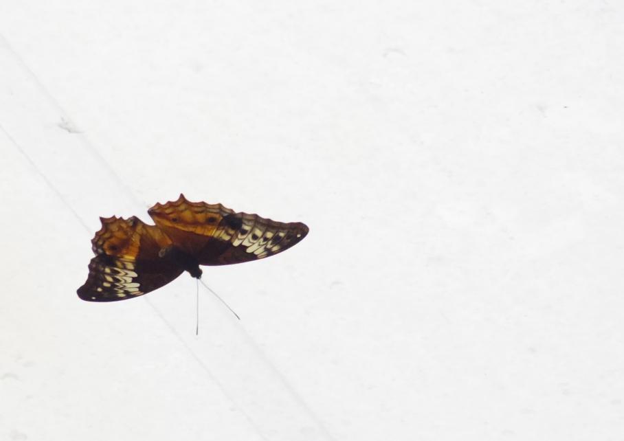 Un tour a deux travel voyage australie Sydney Lezard Wild Life Discovery Buterfly