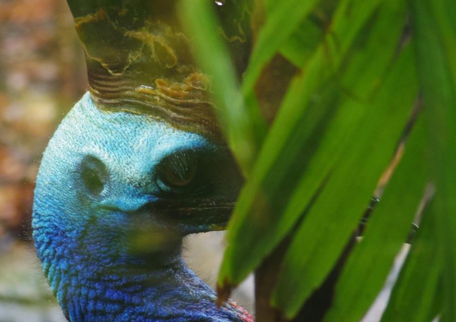 Un tour a deux travel voyage australie Sydney Lezard Wild Life Discovery Emu