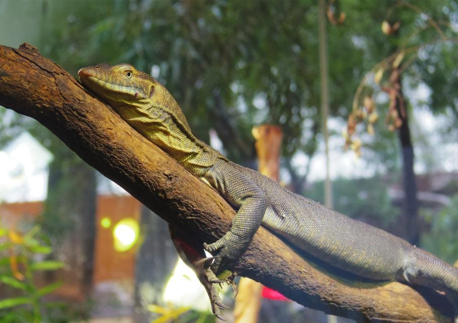 Un tour a deux travel voyage australie Sydney Lezard Wild Life Discovery
