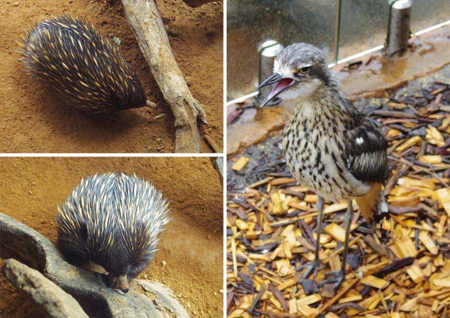 Un tour a deux travel voyage australie Sydney Wild Life Discovery
