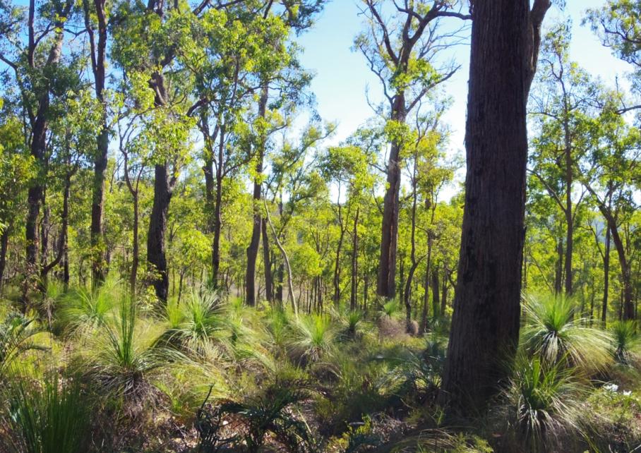 Perth Australie Voyage Blog Travel un tour a deux Trail Kalamunda Randonnee