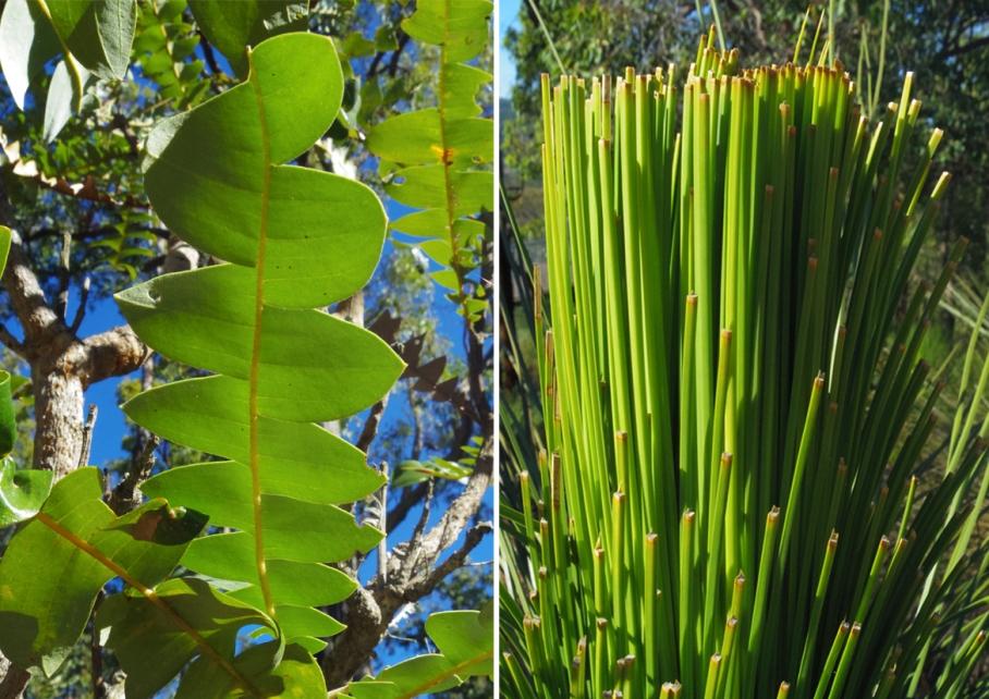 Perth Australie Voyage Blog Travel un tour a deux Trail Kalamunda Western Australia Plantes