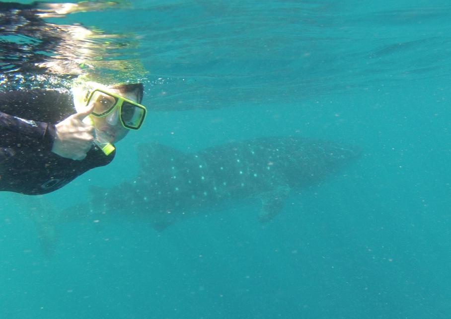 Un tour a deux Exmouth Voyage Australie Travel Requin baleine Whale shark Marianne