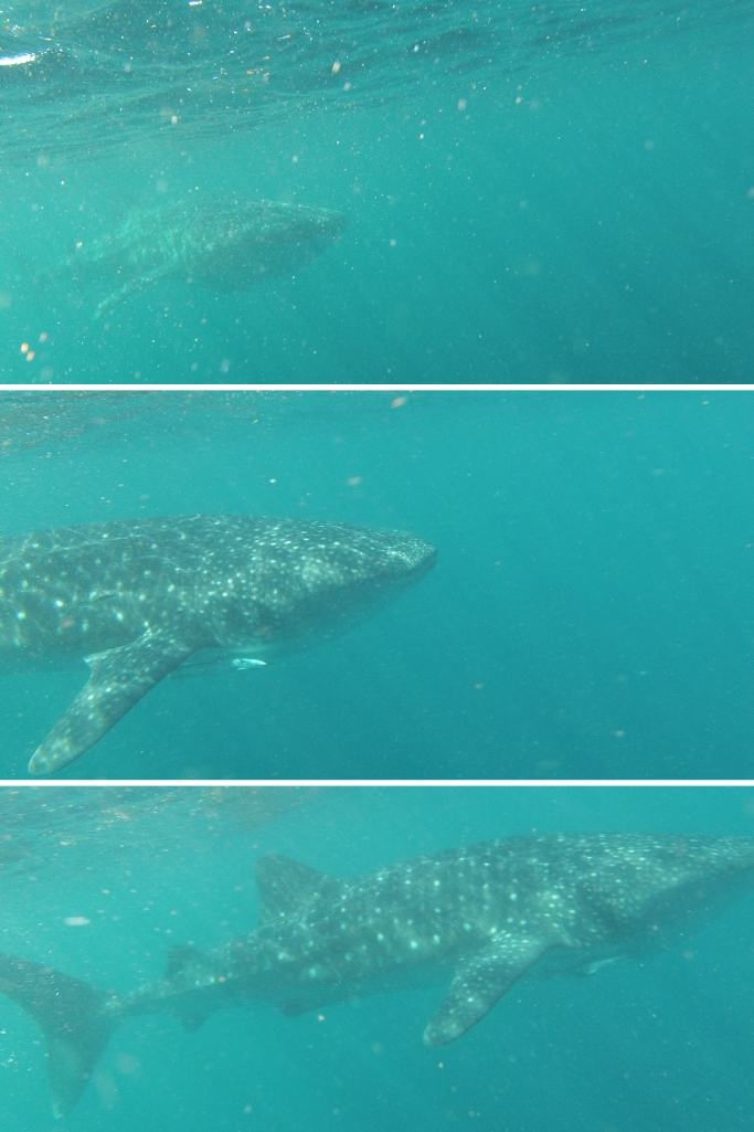 Un tour a deux Exmouth Voyage Australie Travel Requin baleine Whale shark