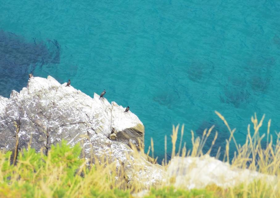 Bretagne Crozon Australie Voyage Decouverte Morgat Blog Travel un tour a deux Cormoran Ile vierge