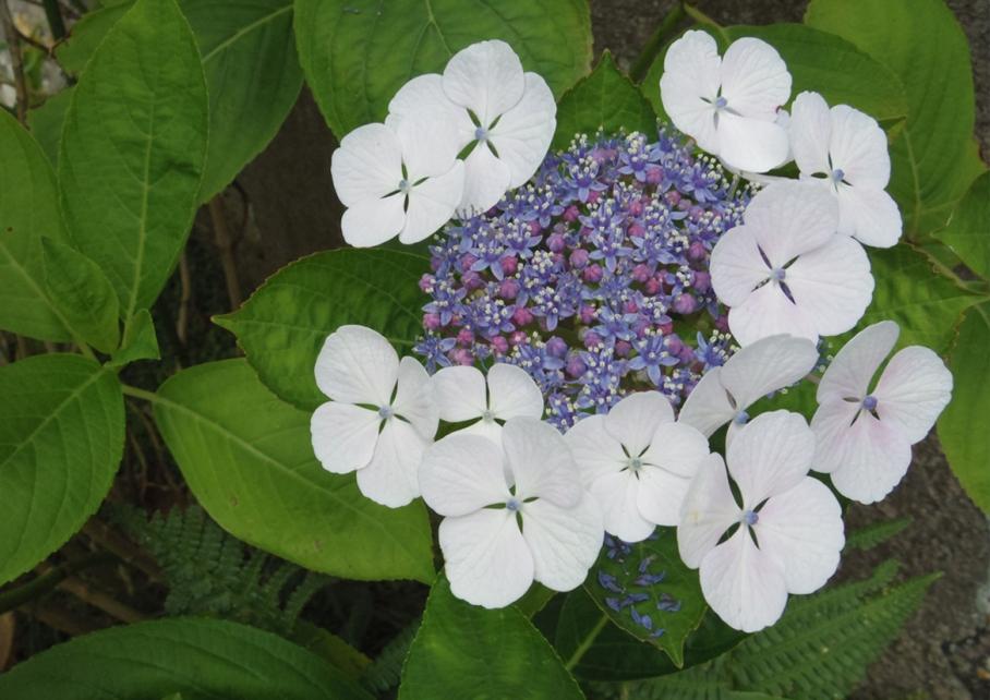 Bretagne Crozon Australie Voyage Decouverte Morgat Blog Travel un tour a deux Kerroux Fleurs
