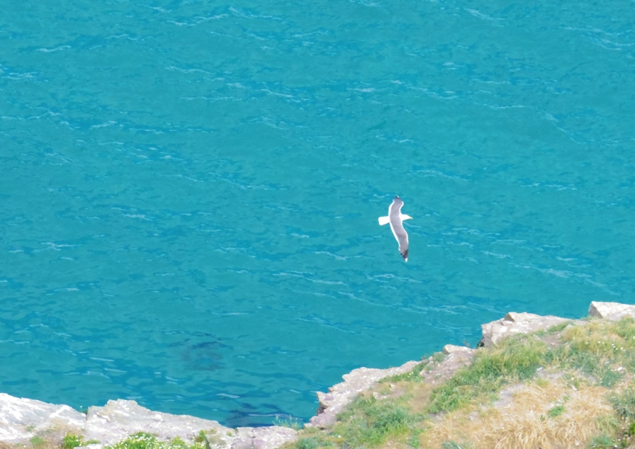 Bretagne Crozon Australie Voyage Decouverte Morgat Blog Travel un tour a deux Mouette Ile vierge