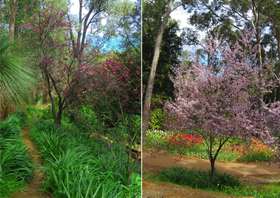 Un tour a deux blog voyage travel  perth australia botnical garden tulip trees