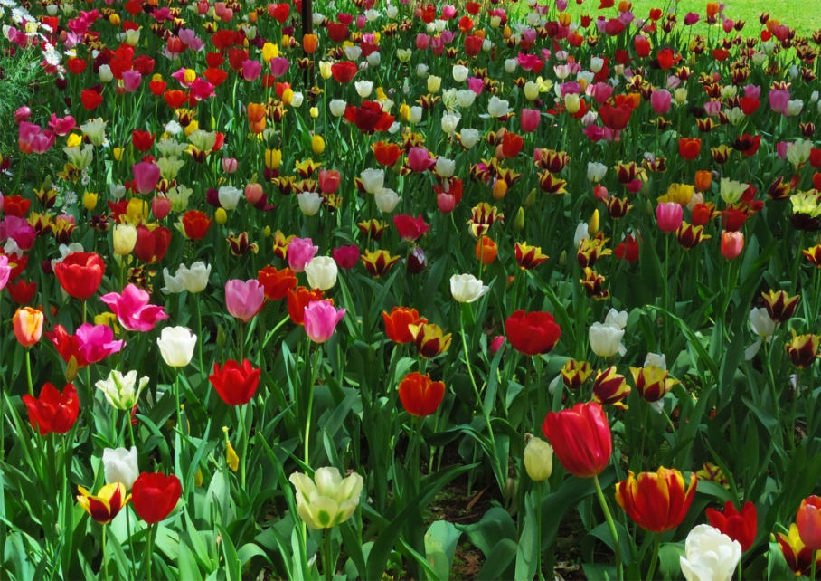 Un tour a deux blog voyage travel  perth australia botnical garden tulips multicolor