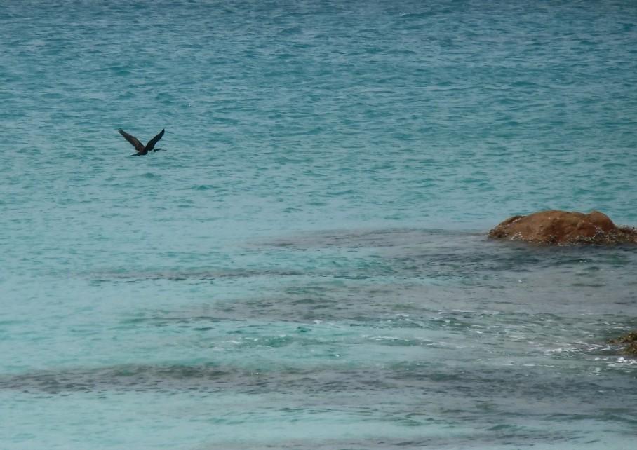 Un tour a deux blog voyage travel perth australia yallingup western australia beach plage margaret river oiseau untouradeux.com