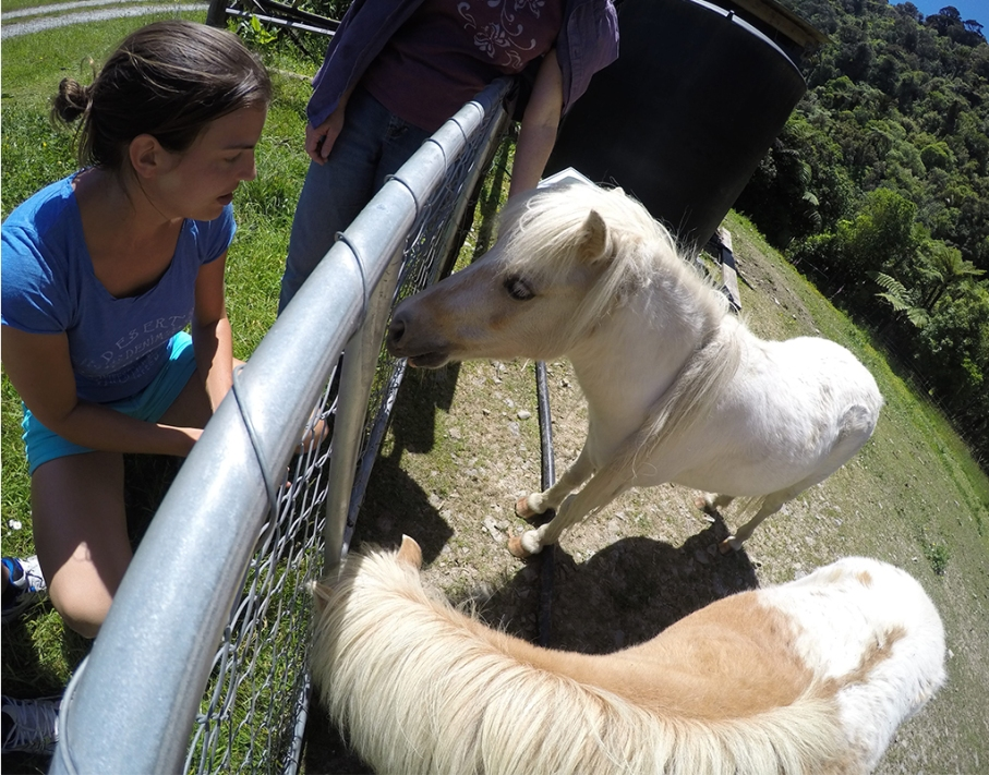Un tour a deux blog voyage travel nouvelle zelande new zealand barrytown knifemafing couteau chevaux