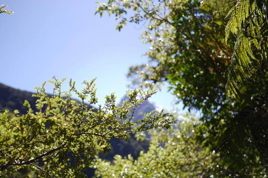 Un tour a deux blog voyage travel nouvelle zelande new zealand milford sound montagnes eau randonnee paysage untouradeux.com