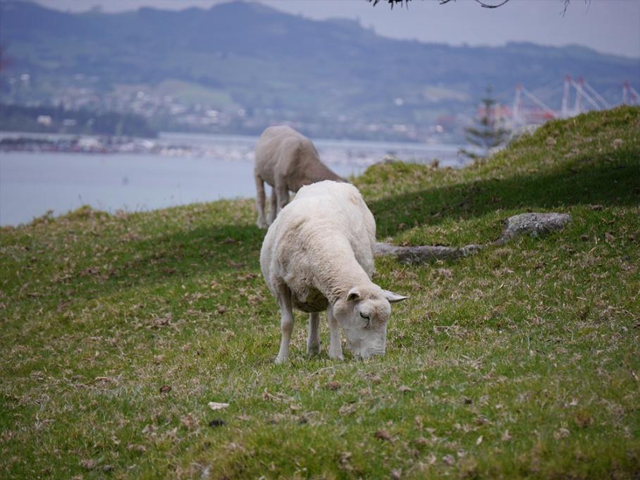 Blog Nouvelle Zelande travel voyage untouradeux tauranga vieuw vue tauranga mauro mouton ile volcan