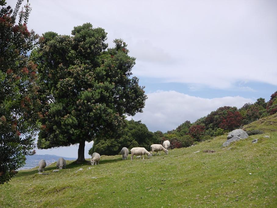 Blog Nouvelle Zelande travel voyage untouradeux tauranga vieuw vue tauranga mauro mouton mont