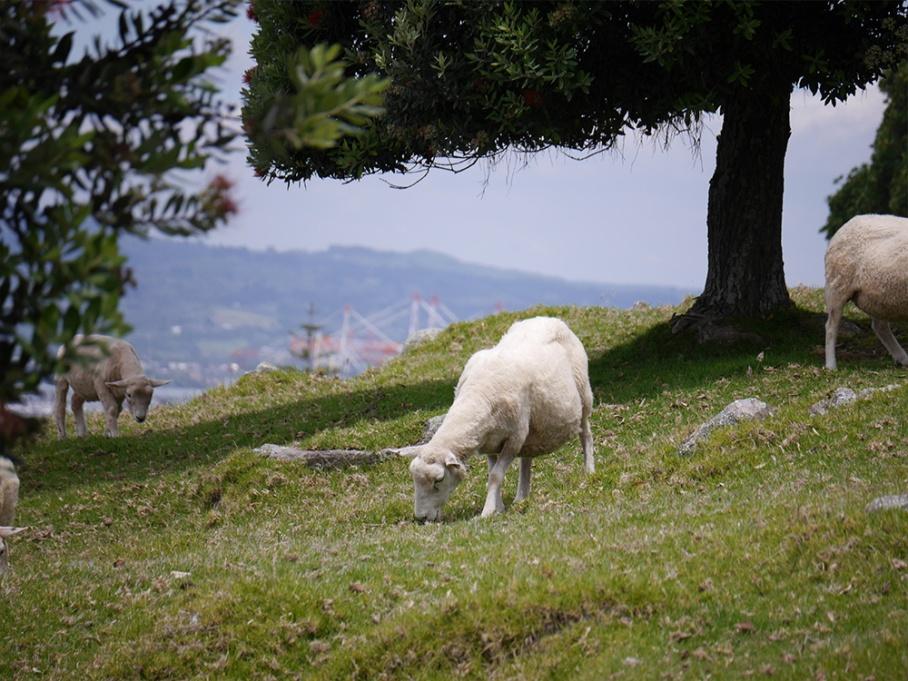 Blog Nouvelle Zelande travel voyage untouradeux tauranga vieuw vue tauranga mauro mouton mount