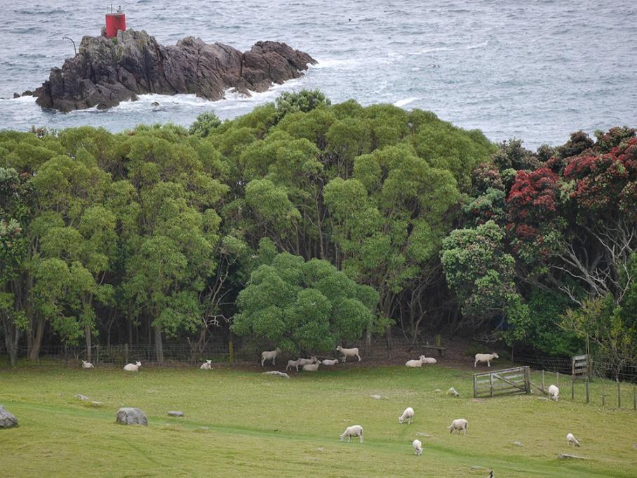 Blog Nouvelle Zelande travel voyage untouradeux tauranga vieuw vue tauranga mauro moutons