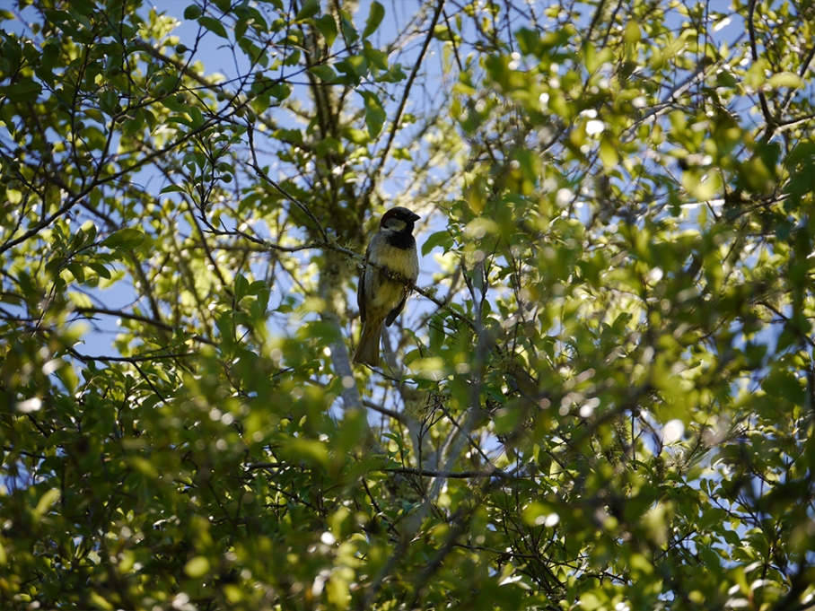 untouradeux blog voyage vue nouvelle zelande new zealand drive bird