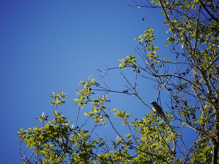 untouradeux blog voyage vue nouvelle zelande new zealand drive oiseau