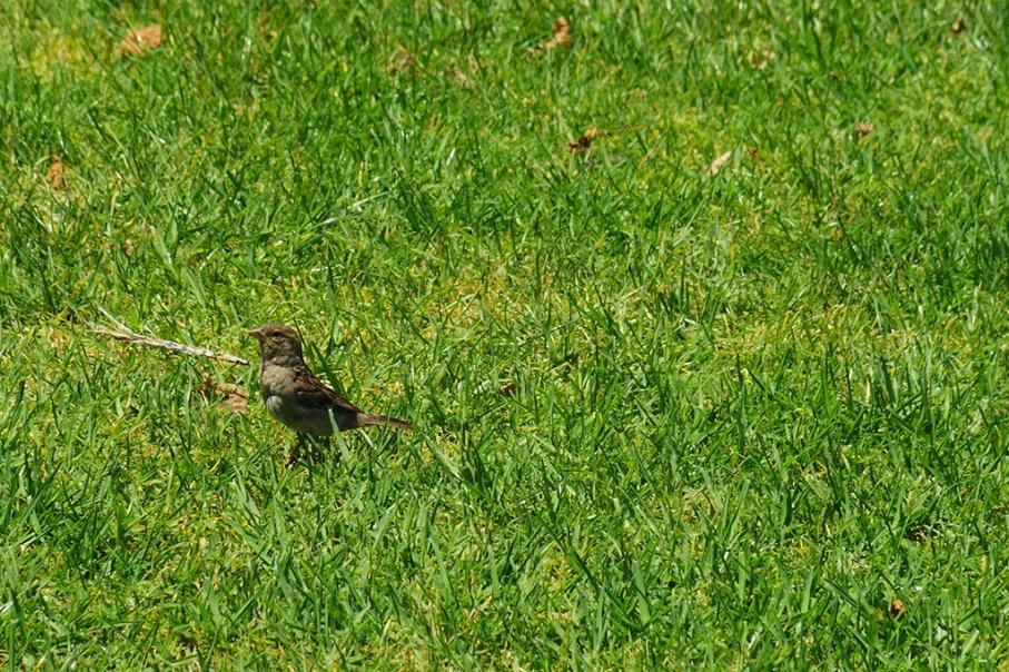 Blog Nouvelle Zelande travel voyage untouradeux auckland bird