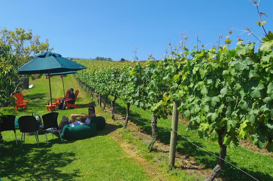 Blog Nouvelle Zelande travel voyage untouradeux auckland waikere